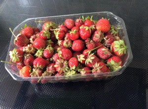 fraises du producteur Drôme
